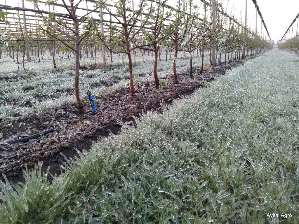 Frost protection and mitigation 1