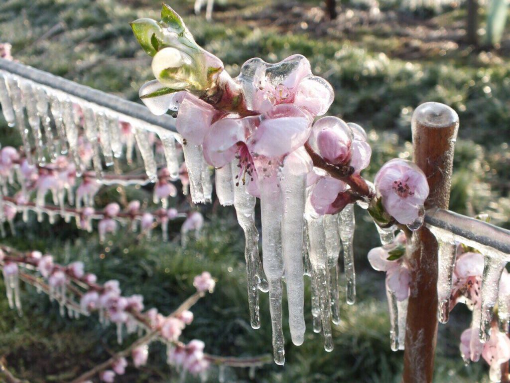 Frost protection and mitigation 3