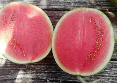 The largest watermelon plantations in Serbia